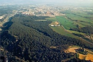 El bosc mediterrani