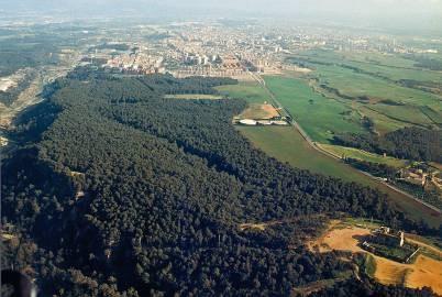Bosc mediterrani