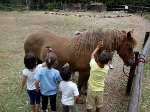 Els animals de la granja i l'hort