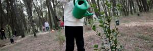 Activitat destacada Noves jornades de recuperació del bosc de Can Deu