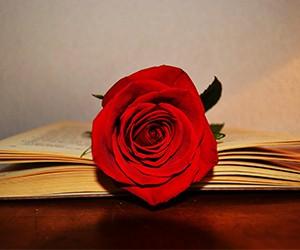 Construeix la teva rosa de Sant Jordi electrònica!