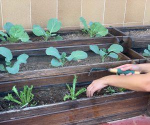 Activitat destacada Taller: Aprèn a fer un hort urbà